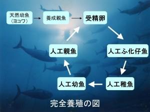 kanzen_zu