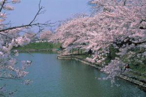 mogami_park