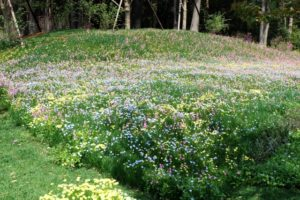 satoyama_garden2