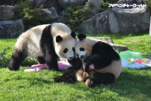 adventure_panda