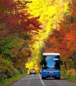 kappa_bus